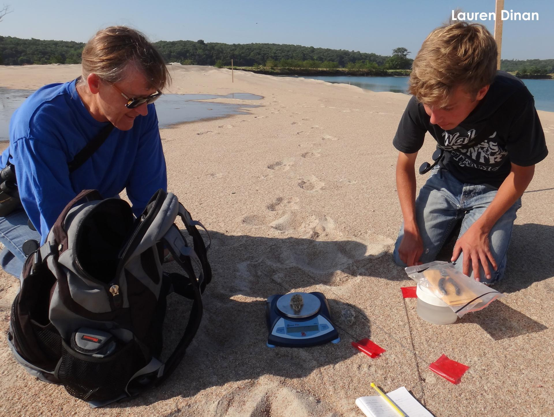 Mary Bomberger Brown and Ian Hoppe weighing a tern chick